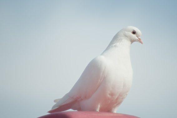 Dove: accentuating the fem in female.